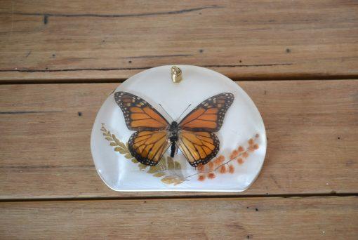 Vintage Australian butterfly Wanderer resin taxidermy office