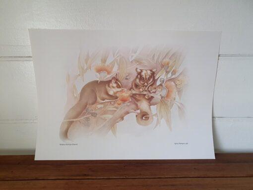 Vintage print Kerrie Mortison 1981 Possum Australiana native animals LBt5